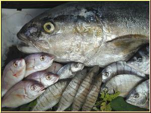 Babygläschen Fisch